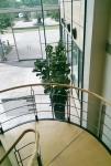 building-entrance-foyer ficus lyrata