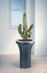 Avantgarde 2 Euphorbia (Cactus)