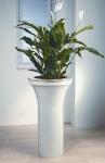 Avantgarde 8 Spathiphyllum