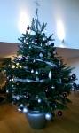 jeronimo-christmas-tree-2014