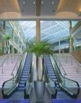Cylik with palm in-situ by escalators