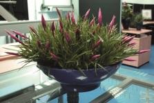 'Bombay' desk planter