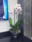 white-orchid-in-stainless-steel-bowl-insitu