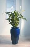 Heritage 1 Spathiphyllum