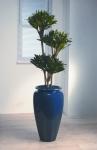 Heritage 4 Spathiphyllum