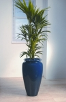 Heritage 5 Howea 'Kentia Palm'
