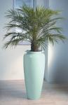 Heritage 10 Phoenix Palm
