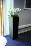 Julius  Tall Planter with white orchids in-situ