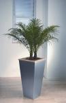 Metropolitan 1 Phoenix Palm