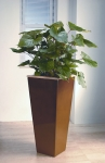 Metropolitan 10 Philodendron 'Red Emerald'