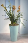 Metropolitan 11 Large Orchid