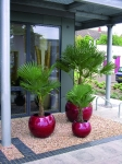 Red Sphere with phoenix palm in-situ