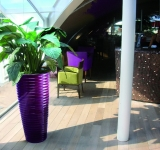 Purple Spin planted with large spathiphyllum in-situ