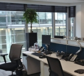 Style Planter with ficus ballhead in open plan office