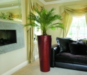 Touch with phoenix palm in-situ